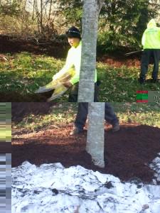 Mulch Installation in Virginia 2012